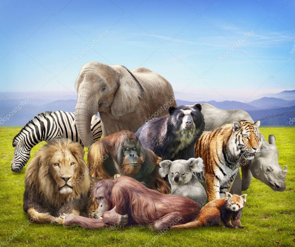 depositphotos_11487300-Group-of-animals.