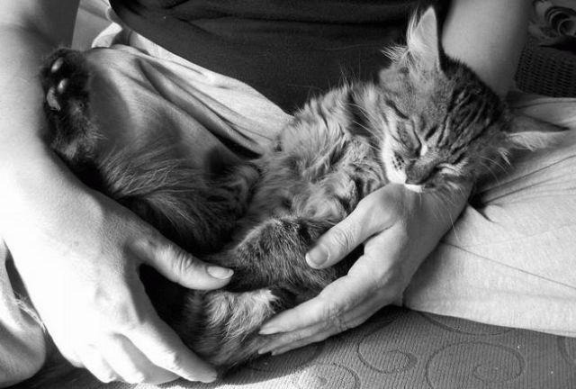 animals-sleep-01.jpg