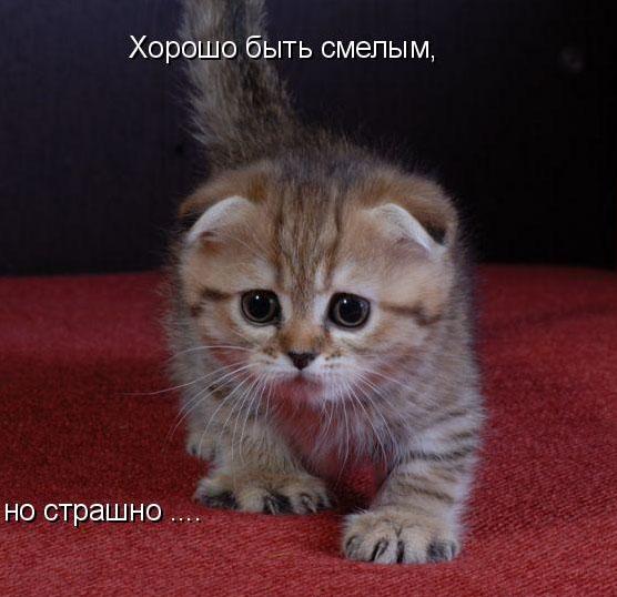 funny_cats_11.jpg