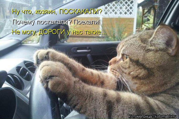 kotomatritsa_28.jpg