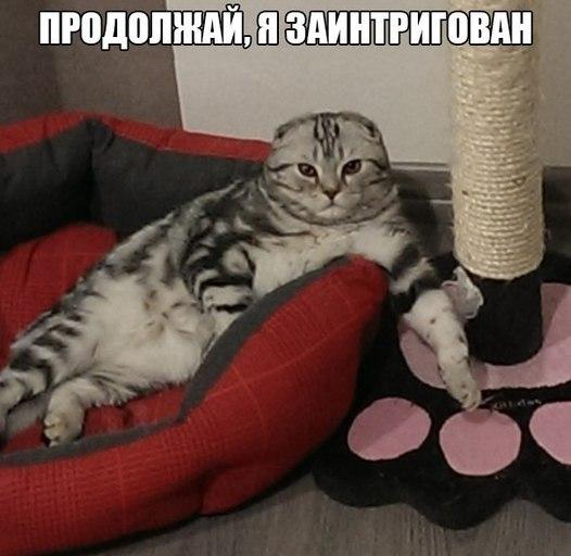 prodolzhaj-ya-zaintrigovan-list.jpg