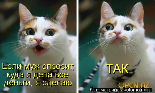 kotomatritsa__-.jpg