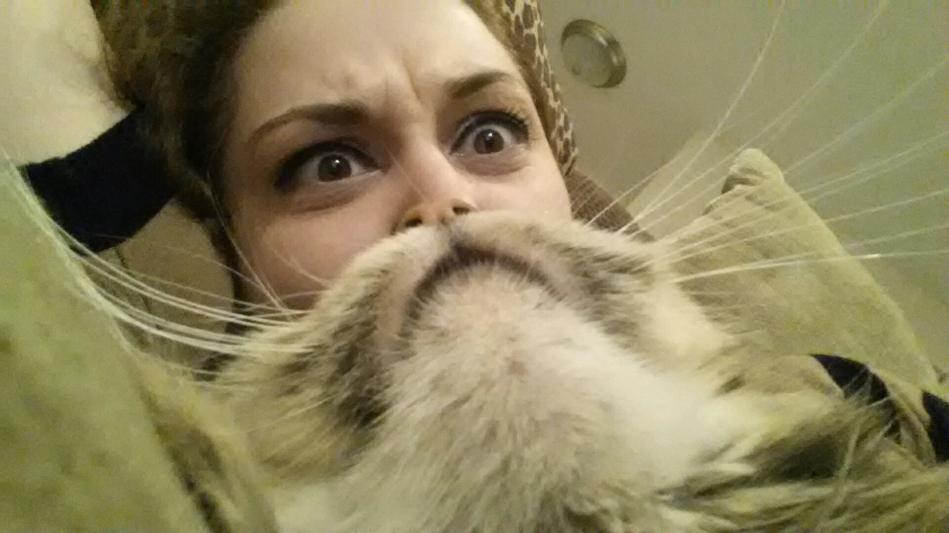 cat-beard-big.jpg