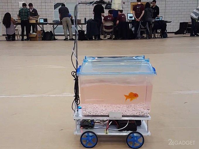 1485520019_fishcar-001.jpg