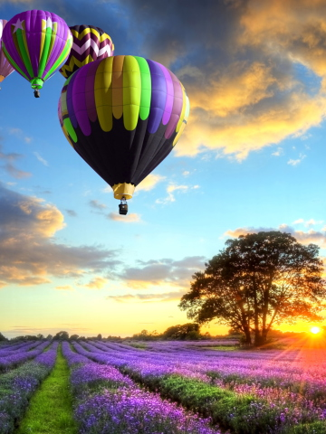 Lavender-Field-360x480.jpg
