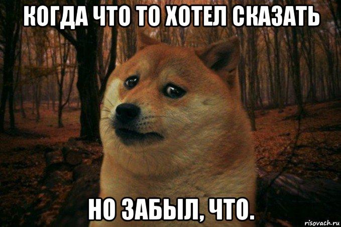 sad-doge_75001700_orig_.jpg