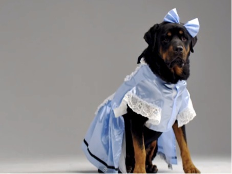 20150227-funny-dog-videos-enough-with-cute-pets-give-us-tutus-and-lederhosen.jpg
