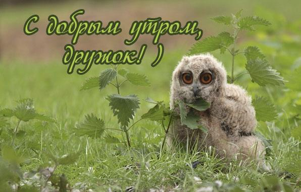 images_659.jpg