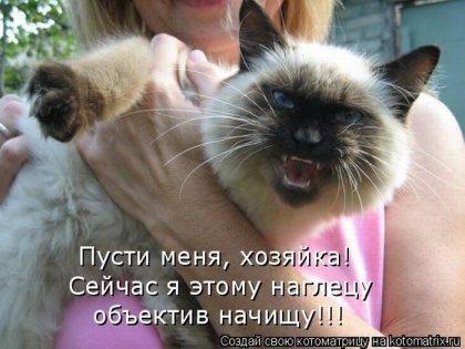 1286148967_kotomatrix.jpg
