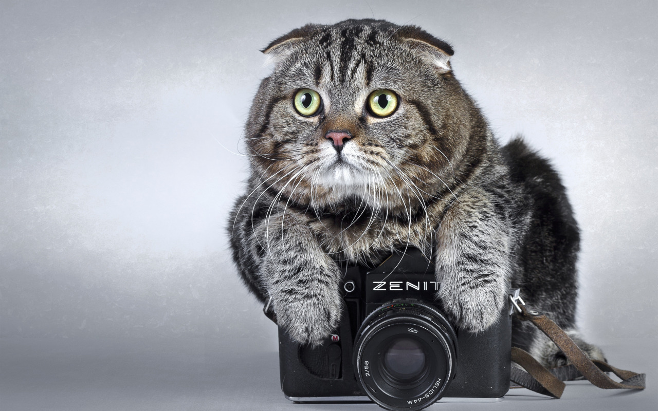 kot-fotoapparat-kamera-zenit.jpg?d=1