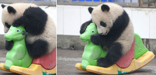 panda-i-loshadka-1.jpg