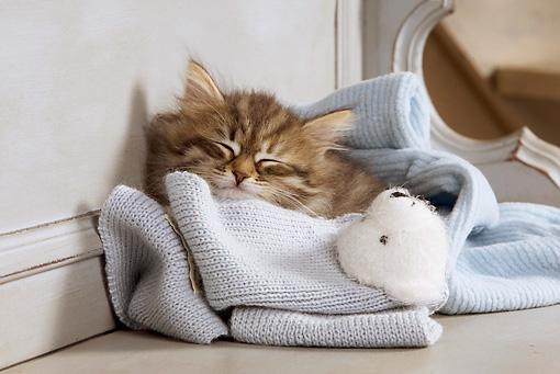 filhote-dormindo.jpg