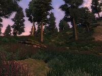 Западный лес