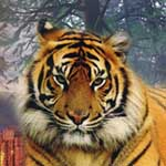 Аватар пользователя IgorLutiy