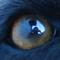 Аватар пользователя Visman