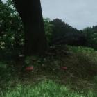 Грибная полянка