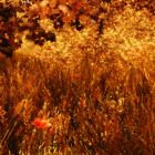 Осенние тона