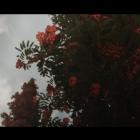 Oblivion 2014 08 18 14 52 55 85