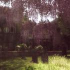 Весна на кладбище