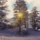 The winter morning