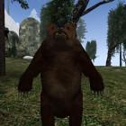 Медвед Грызля