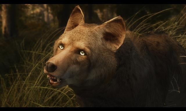 И снова волчата)