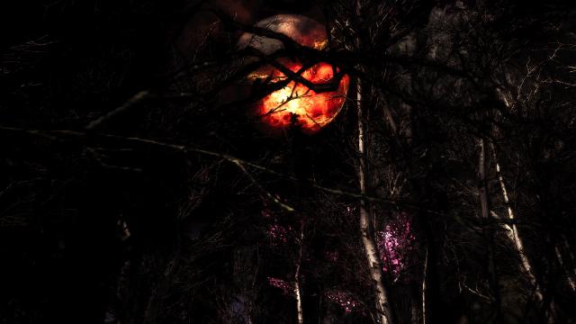 В темном темном лесу...