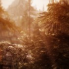 Тёплая осень