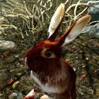 Bestiarium : заяц .