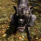 Bestiarium : волк .