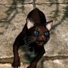 Bestiarium : кот .