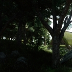 Полулунная лесопилка