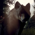 Волчицы
