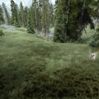 Трава и олени.
