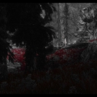 Bloody Forest.