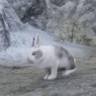 Серый/Белый заяц