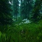 Леса Скайрима