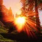 Sunrays(солнечные лучи)