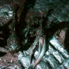 Подземный Скайрим