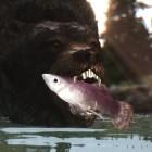 Медведь со своей добычей