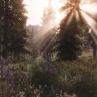 В лесу Фальскара