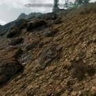 TESV   Покрытие почвы - тест