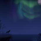 Night on the Bleackrock Isle