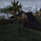 Потерявшийся верблюд