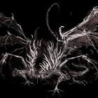 Разверстый Дракон