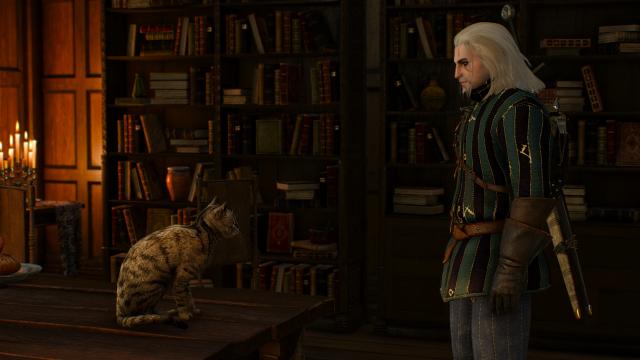 Ведьмак и кот