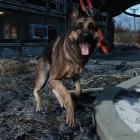 Надыбал собаку - готов путешествовать!