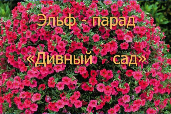 pre_1522538257____.jpg