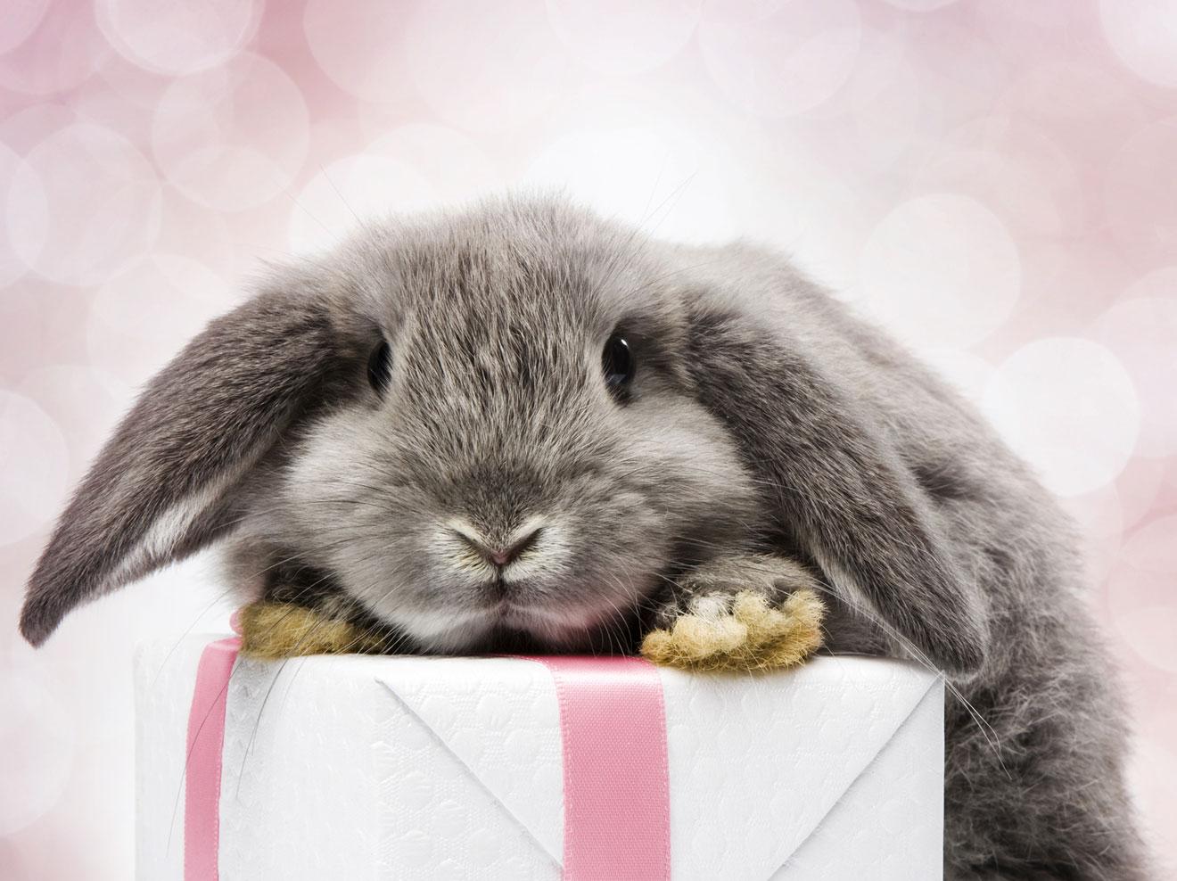 пожелание кролиководу в день рождения эльфы которых лично