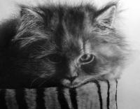 Аватар пользователя Katze Siegie